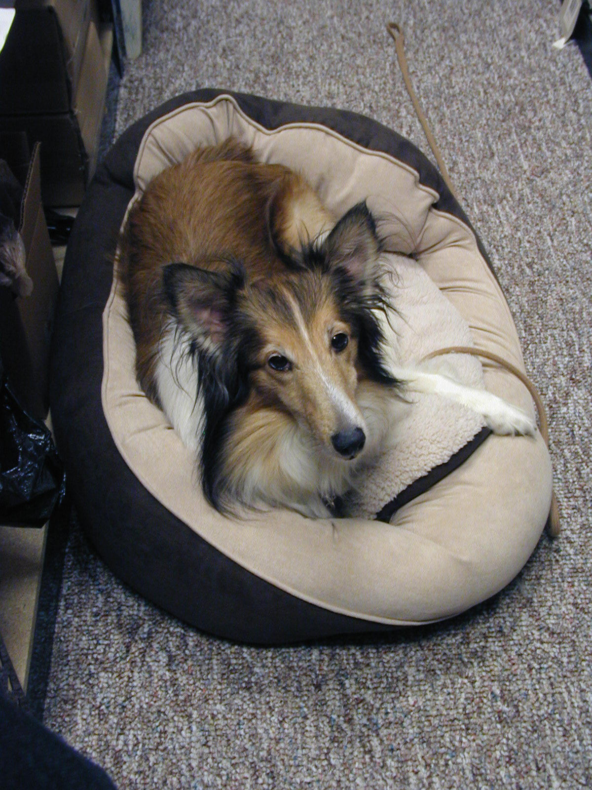 Pet Feeders, Pet Rugs, Pet Breed Pictures, Pet Pottery, Pet Furniture